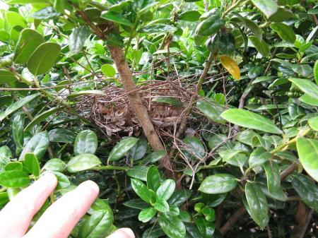 Bird's Nest I Found in a Bush in the Labyrinth Garden