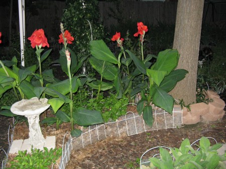 canna in the labyrinth at night