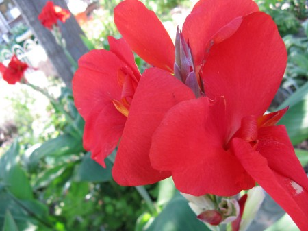 Bright red cannas are supposed to be the most invasive, but mine aren't overly so.