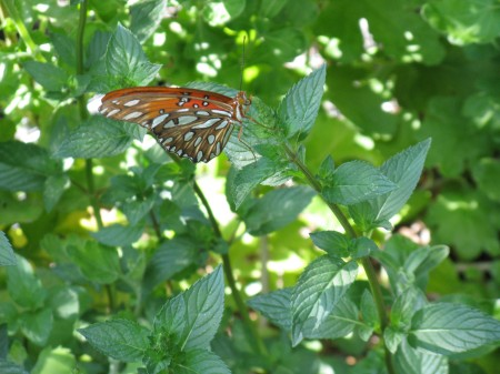 A beautiful visitor to the Labyrinth Garden.