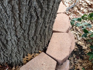 tree-against-brick